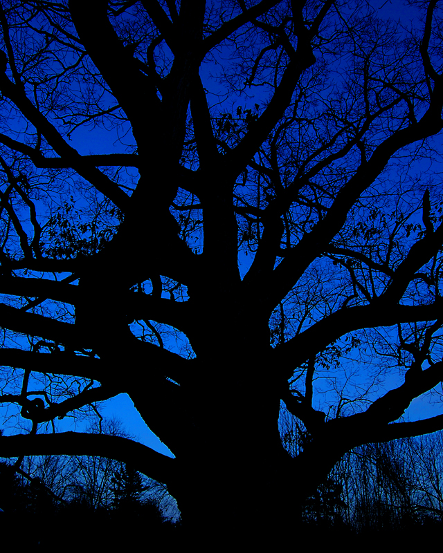 maxfield-parrishs-oak-tree-at-dusk